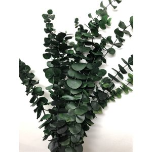 "Eucalyptus préservé 24"" 16oz"